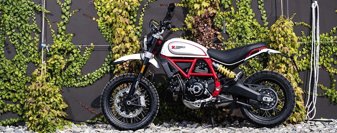 Ducati Scrambler Desert Sled 2019 Modellnews