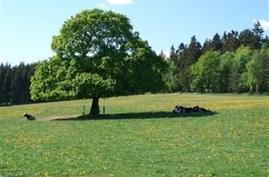 /beitrag-honda-semmler-4te-tour-hsk-16-09-2012-10-uhr-3679