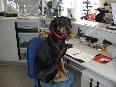 Balu der Firmenhund