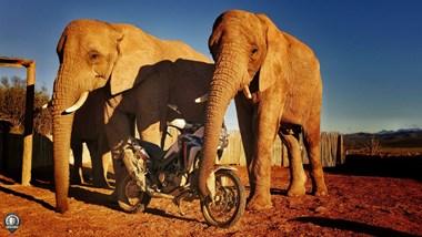 /newsbeitrag-honda-adventure-roads2019-africatwin-128832